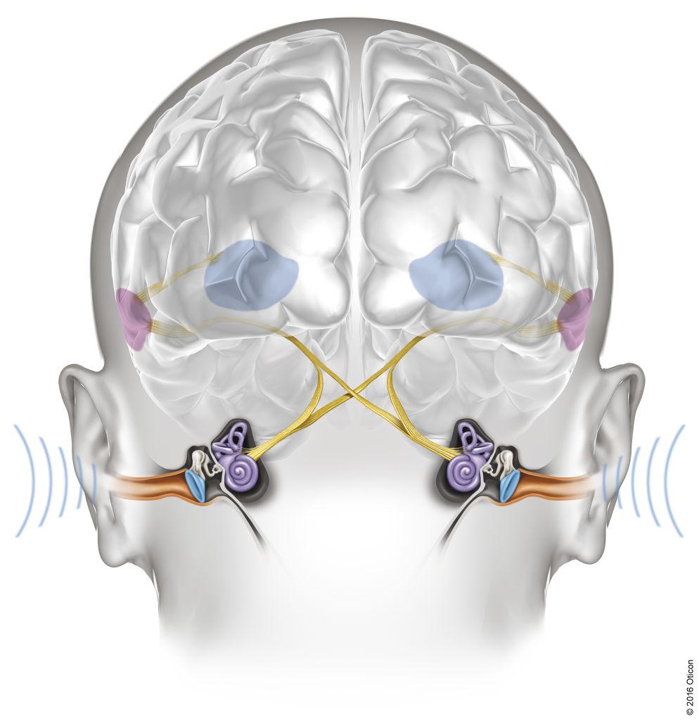 Oticon_Velox_Ears_Brain_BrainHearing_Illustration_Light_Width300mm_300dpi_C_2016_Oticon